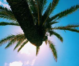 beautiful, hawaii, and summer image