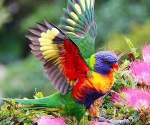 bird, colourful, and nature image