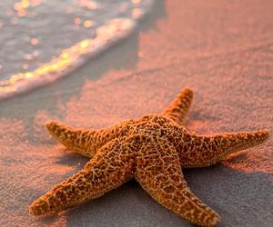 beach, starfish, and sea image