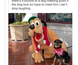 dog, funny, and pluto image