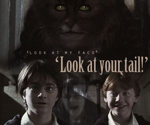 chamber of secrets, hp, and harry potter image