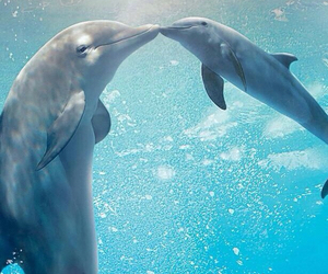 dolphin, ocean, and animal image