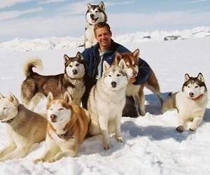 paul walker, dog, and eight below image
