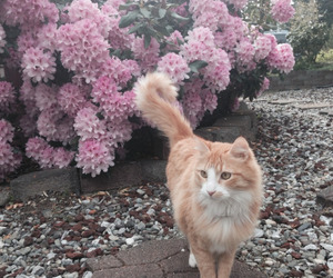cat, flowers, and pale image