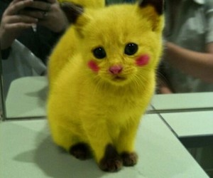 Image D Animaux Trop Mimi 27 images about animaux trop chou on we heart it | see more about