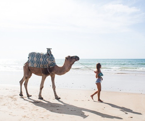 beach, camel, and summer image
