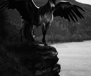 horse, black and white, and wings image
