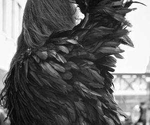 black and white, black, and feathers image