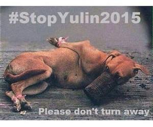dog, help, and stopyulin image