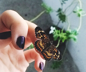 beautiful, black, and butterfly image