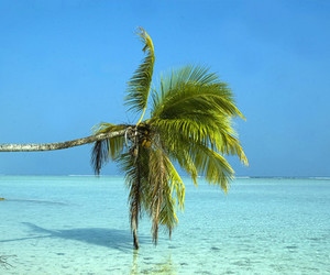 summer, palm trees, and sea image