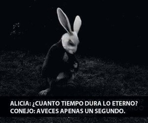alicia, rabbit, and frases image