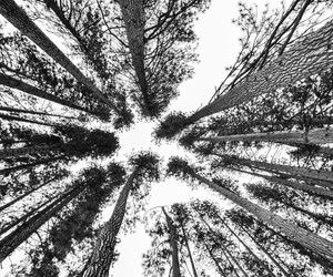 black, forest, and white image