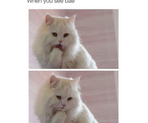 cat, funny, and bae image