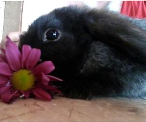 black, rabbit, and tambor image