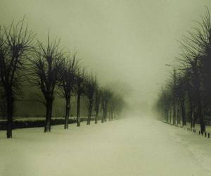 dark, trees, and winter image