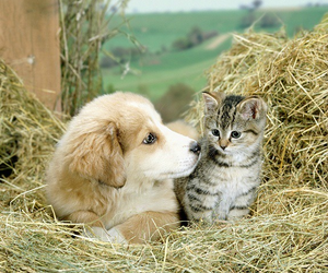 kitten, puppy, and cats image