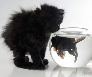 cat, fish, and kitten image