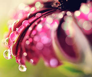 flower, drop, and pink image