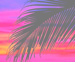 palm tree, photography, and red image