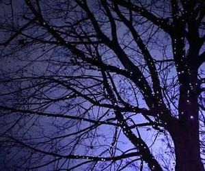 lights, night, and tree image