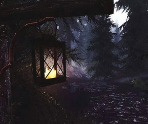 forest, light, and dark image