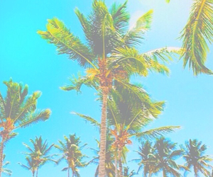 palm trees, blue, and green image
