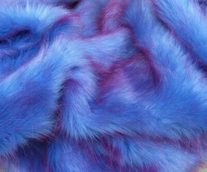 blue, fur, and purple image