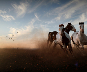 horse, photography, and wild image