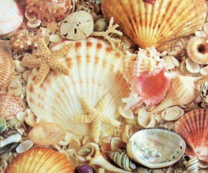 shell, beach, and seashells image