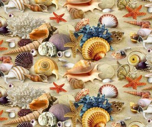shell, sea, and sand image
