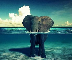 elephant, water, and animal image