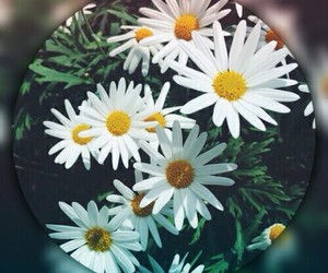 background, blur, and flowers image