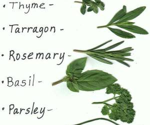 herbs, plants, and hierbas image