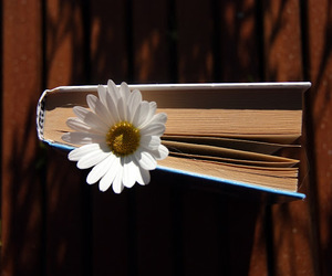 book, serene, and daisy image