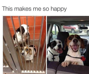 dog, happy, and funny image