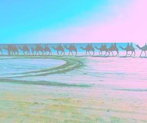 blue, camels, and filter image