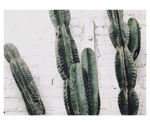 aesthetic, cactus, and grunge image