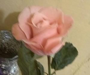 boyfriend, flower, and in love image