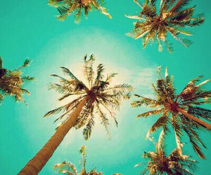 summer, sun, and palm trees image