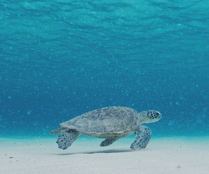 turtle, sea, and blue image