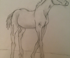 art, drawing, and foals image
