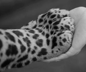 animal, tiger, and hand image