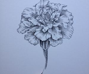 drawing and marigold image