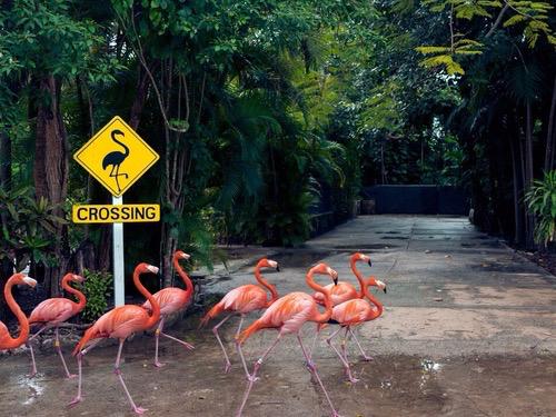 flamingos, flamingo, and travel image