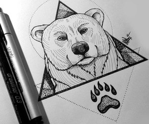 bear, drawing, and animal image