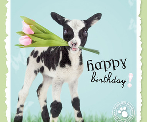 bday, flowers, and goat image