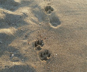 beach, dog, and footprints image