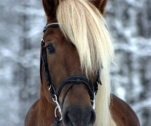 horse, animal, and winter image