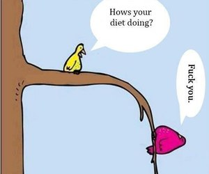 diet, bird, and funny image